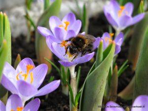 in de eerste warme lentezon...